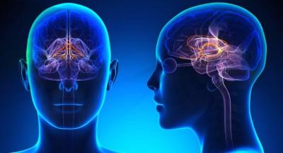 d brain imaging feature snapmunk