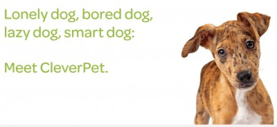 lonely dog, bored dog, lazy dog, smart dog: meet CleverPet