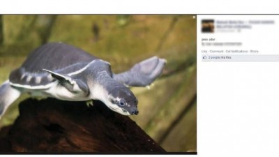 endangered sea turtle being traded on Facebook