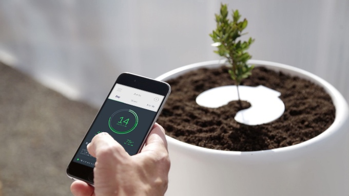 Bios InCube mobile app monitors tree grown from cremated remains