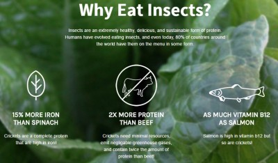 why eat insects