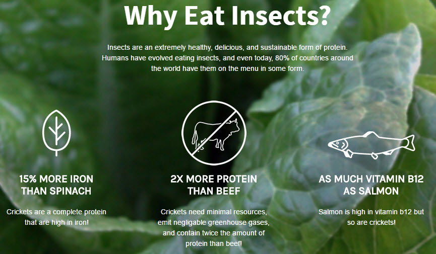 benefits of eating insects