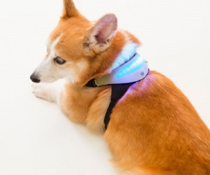 Inupathy smart dog collar