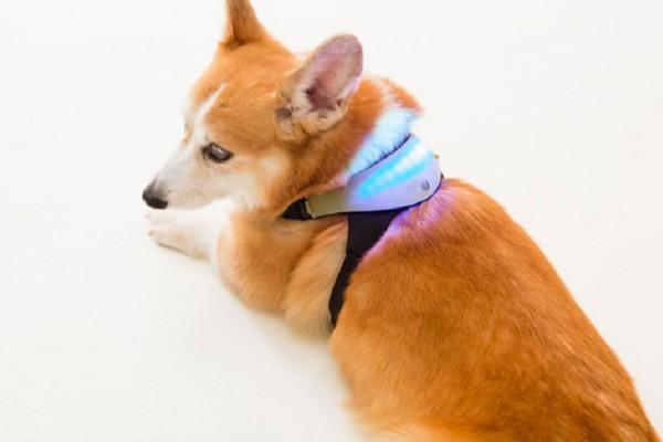 Inupathy smart dog collar
