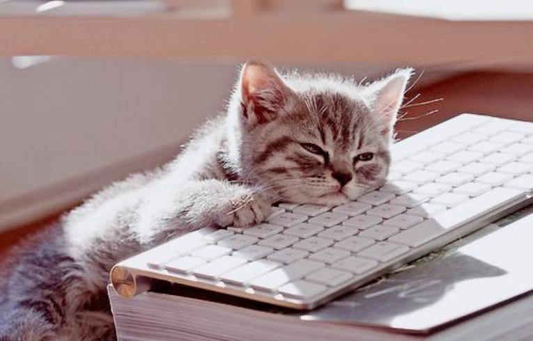 kitten bored from social media mistakes like bland content