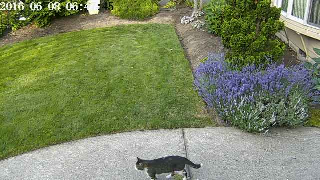 cat AI security and sprinkler system