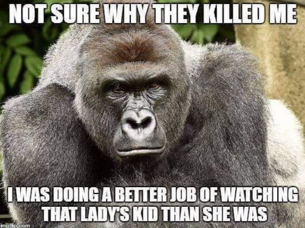 Harambe meme posted on Cincinnati Zoo social media