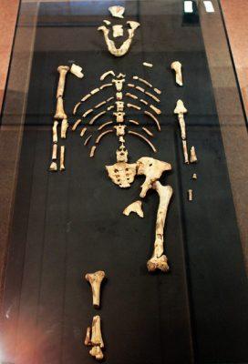 nytimes lucy ethiopia bones hominid snapmunk