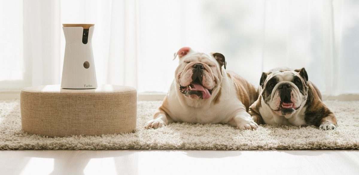 New Tech For Dogs: Startups To Help Monitor, Feed, Pamper & Play With Your Pooch
