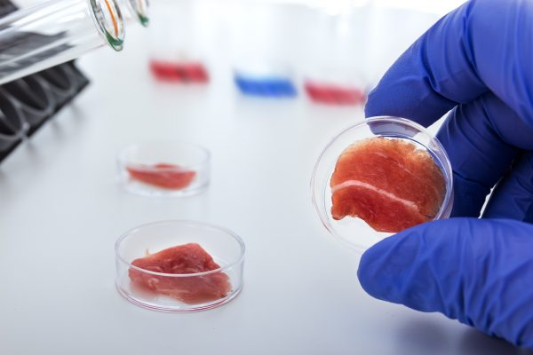 lab-grown chicken meat in petri dishes