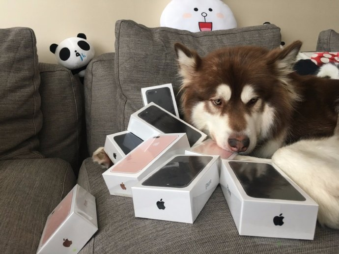 Chinese billionaire's dog surrounded by multiple iPhone 7s