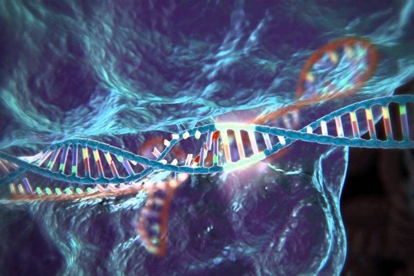 a DNA sequence edited through the CRISPR process