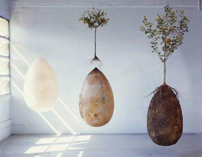 capsula mundi death organic snapmunk