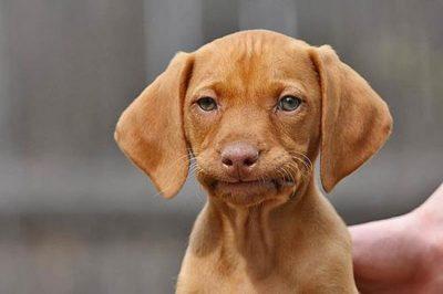 dog not impressed