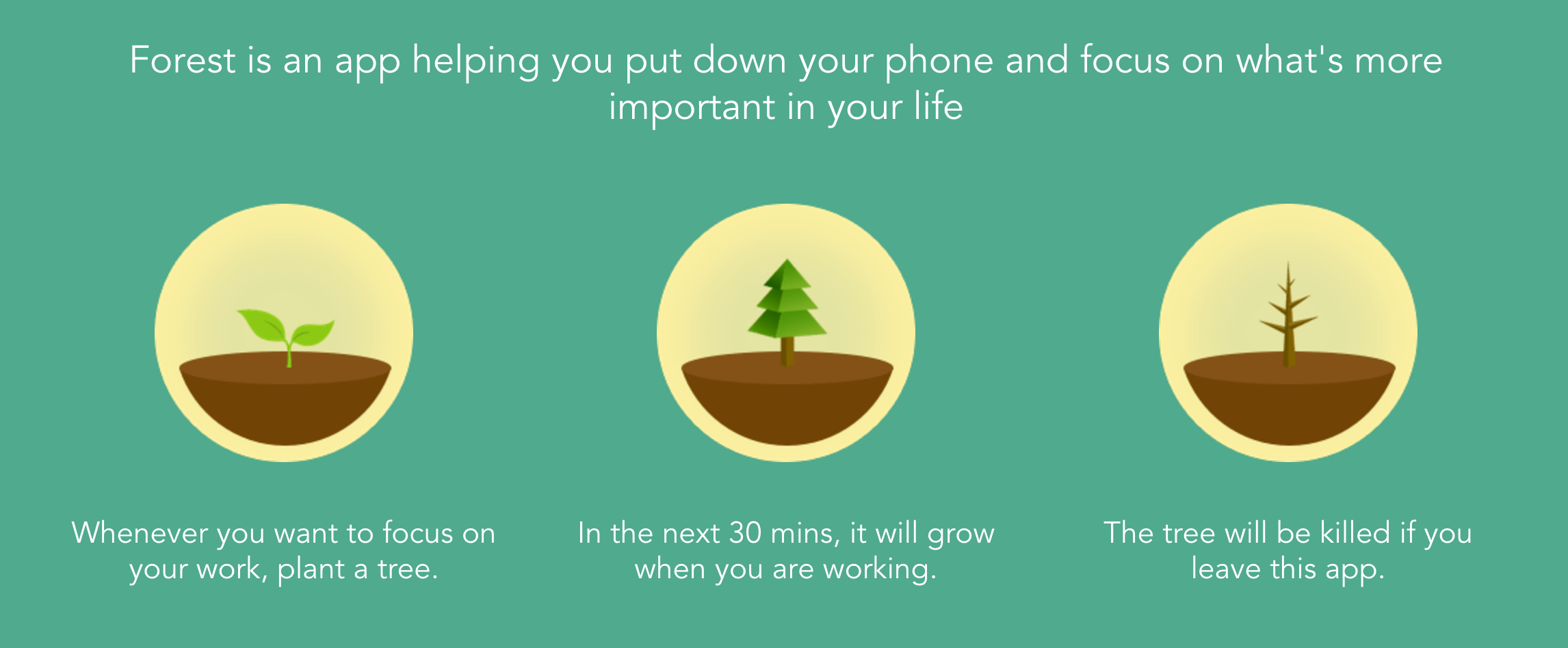 Forest productivity app's premise of growing trees