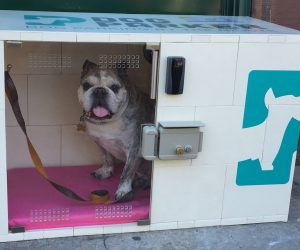 rental dog house from Dog Parker