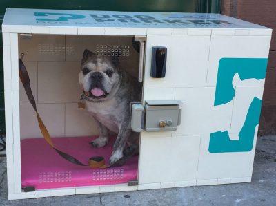 rental dog house from Dog Parker