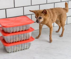 Human-Grade Custom Dog Food Startup Ollie Raises $4.4M
