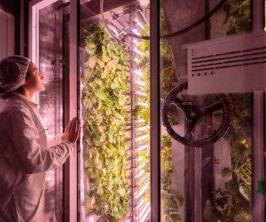 FrenchstartupAgriCoolgrowspesticide freeproduce