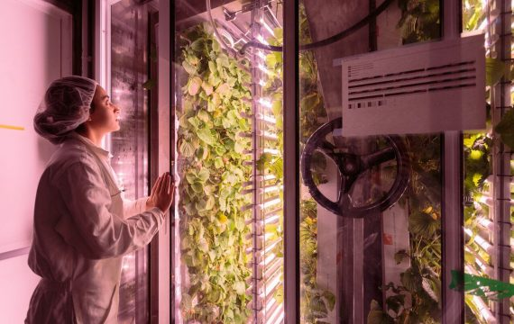 French startup AgriCool grows pesticide-free produce
