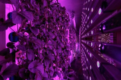Climate controlled shipping container grows fruits, vegetables