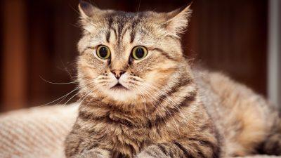 scared cat snapmunk