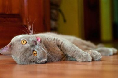flustered cat snapmunk