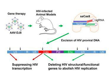 HIV Might Be DOA Thanks to CRISPR DNA-Editing Tech