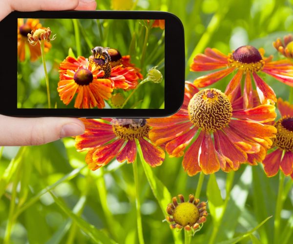 New Beekeeping App Spots Pests And Infections That Destroy Bee Colonies